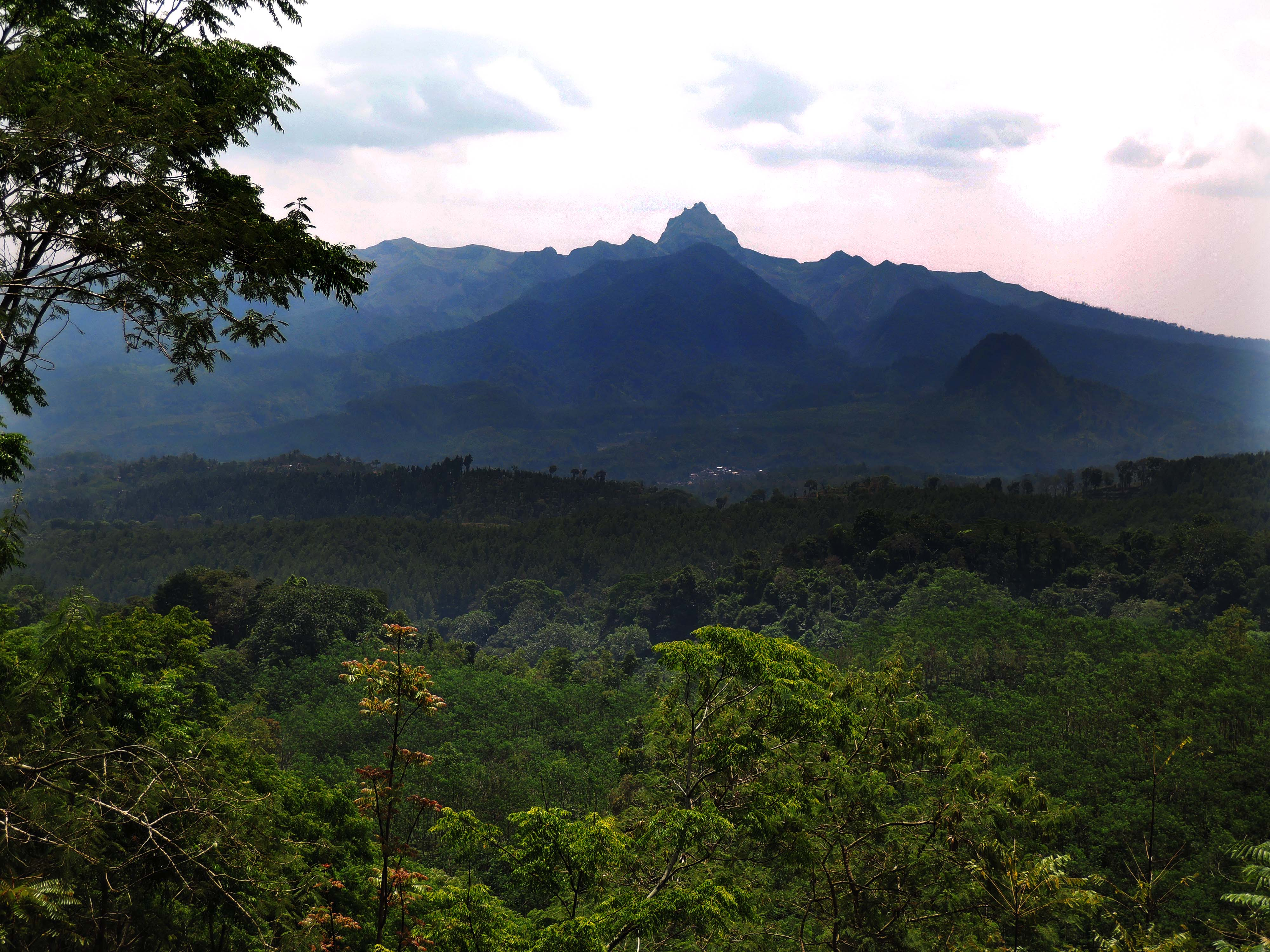 a romantic journey to the old java coffee plantations